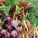 Join in foodcoop – new season!